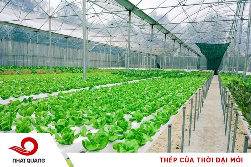 Dùng thép dựng khung kết cấu nhà kính trồng rau